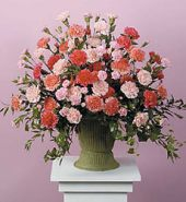 Pink and Peach Carnations